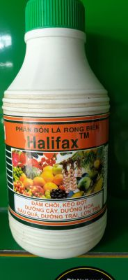 RONG BIỂN HALIFAX 500ML